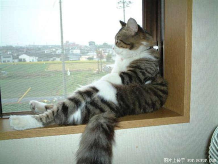 研究發現看看窗外的景色有助於緩解壓力